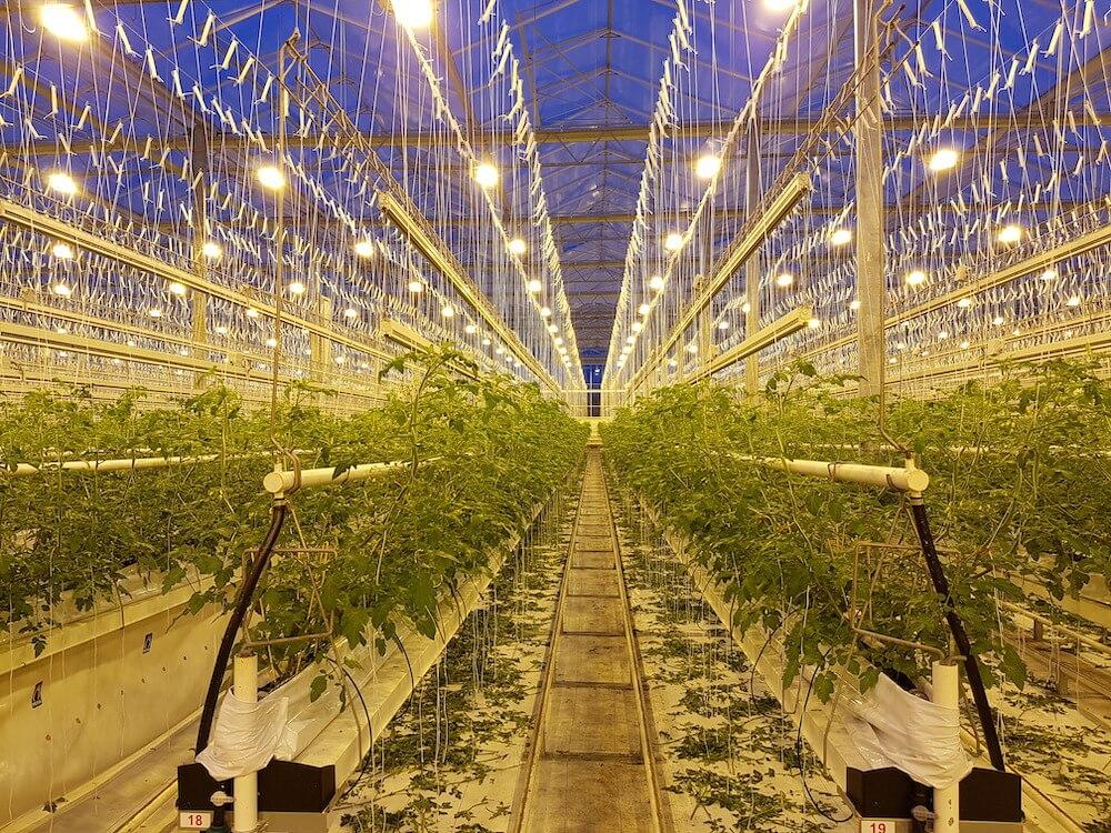 'La Serra' – EVG Investment for Lit Production