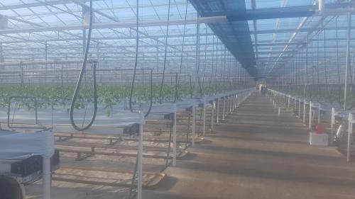 Planting at Hornsfield