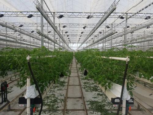 September Planting completed at Sandylands and first picks at La Serra!